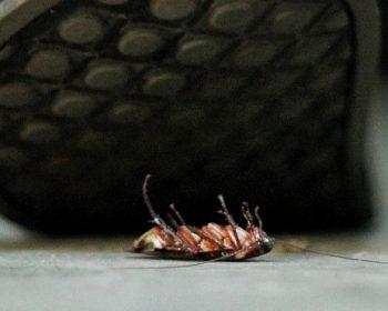 Ako zbaviť domov všetkých švábov za jedinú noc